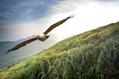 Free flight through our wings — Stock fotografie