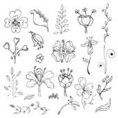 Hand drawn floral design elements set — Stock Vector