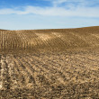 Agricultural land soil and blue sky — Stock Photo
