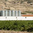 Vineyards and winery factory — Stock Photo