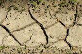 Land parched land — Stock Photo