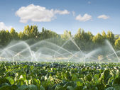 Irrigation systems in a vegetable garden — Stockfoto