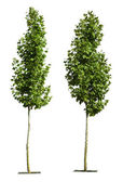 Green trees isolated on white — Stock Photo