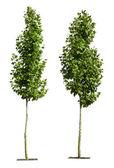 白で隔離される緑の木々 — ストック写真