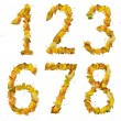 Stock Photo: Set of numbers made of autumn leaves