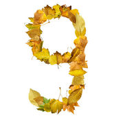 Number nine made of autumn leaves. — Stock Photo