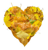 Heart made of autumn leaves — Stock Photo