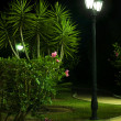 Night picture of the lamp in the park - Stock Photo