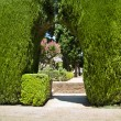Garden with green bushes - Stock Photo