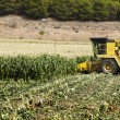 Harvester reaps corn — Stock Photo