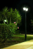 Night picture of the lamp in the park — Stock Photo