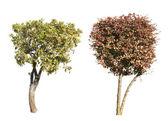 Grün und dunkel lila bäume, die isoliert auf weiss. — Stockfoto