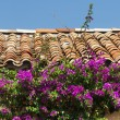 Tile roof and purple flowers — Stock Photo #14144968