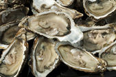 Oysters on a silver platter — Stock Photo