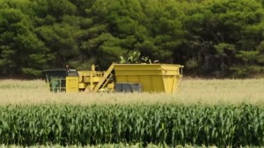 Harvester reaps green corn — Stock Video