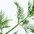 Fresh dill — Stock Photo #16232379