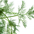Fresh dill — Stock Photo #16232389