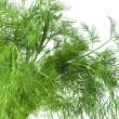 Fresh dill — Stock Photo #16232391