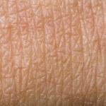 ������, ������: Human skin