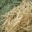 Straw and hay close up background — Stock Photo #19358439