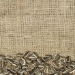 Closeup raw sunflower seeds on burlap — Stock Photo