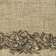 Closeup raw sunflower seeds on burlap — Zdjęcie stockowe