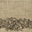 Closeup raw sunflower seeds on burlap — Stok fotoğraf