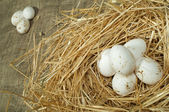 Organic domestic white eggs in straw nest — Stock Photo
