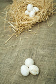 Organic white domestic eggs in straw nest — Stock Photo