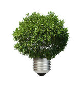 Lamp made of green tree. Ecology conception — Stock Photo