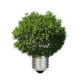Lámpara hecha de árbol verde. concepto de ecología — Foto de Stock