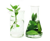 Green plants in laboratory equipment — Stock Photo
