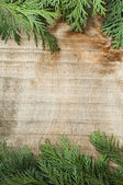 Wood and fir branches background — Stock Photo