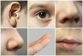 Set of the human senses — Stock Photo