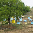Meadow with bee hives — Stock Photo #27369943