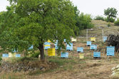Meadow with bee hives — Stock Photo