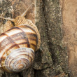 Snail on tree bark — Stock Photo