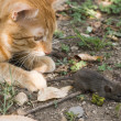 Cat and mouse in garden — Stock Photo #32994539