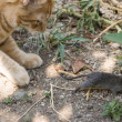 Cat and mouse in garden — Stock Photo #32994607