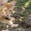 Stock Photo: Cat and mouse in garden