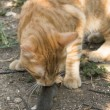 Cat and mouse in garden — Stock Photo