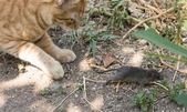 Cat and mouse in garden — Stockfoto