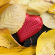 Red wrapped heart and autumn leafs — Stock Photo