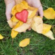 Hand holding Red heart and autumn leafs — Stok fotoğraf