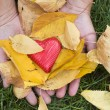 Hand holding Red heart and autumn leafs — Photo