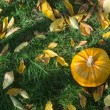 Pumpkin on grass and autumn leaves — Stock Photo