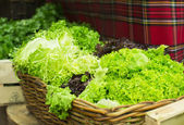 Lettuce salad in a shop — Foto Stock