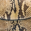 Texture of genuine snakeskin — Stock Photo #38194061