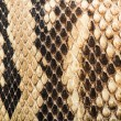 Texture of genuine snakeskin — Stock Photo #38194073