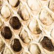 Texture of genuine snakeskin — Stock Photo #38194093